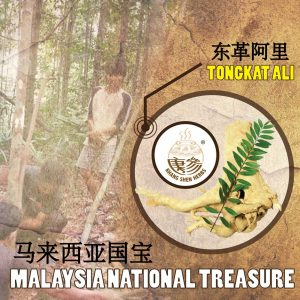 Tongkat Ali Malaysia - Khang Shen Herbs