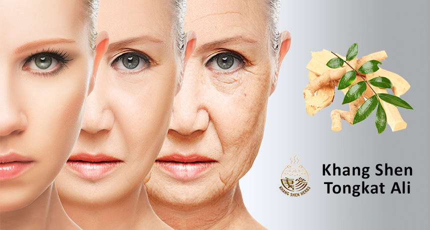 Tongkat Ali prevent menopause naturally - Khang Shen Herbs